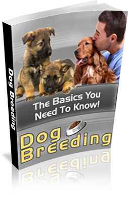 Product picture Dog Breeding Basics You Need To Know includes PLR
